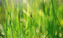 Insekt auf einem ansteigenden Kampf Stockbild
