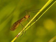 Insekt auf einem Grasstiel Stockfoto