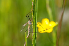 Insekt auf einer Blume Stockfotografie