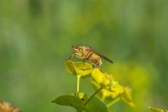 Insekt auf einer Blume Lizenzfreies Stockbild