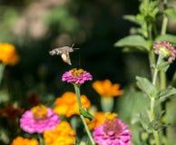 Insekt auf einer Blume Stockfotos
