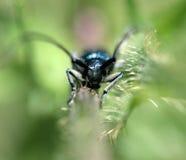 Insekt auf einer Grünpflanze, Makro Stockfotografie