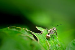 Insekt auf grünem Blatt Lizenzfreie Stockfotos