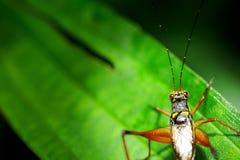Insekt auf grünem Blatt Lizenzfreies Stockbild