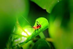 Insekt auf grünen Blättern Stockfoto