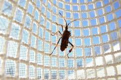 Insekt auf Ineinander greifen Lizenzfreie Stockbilder