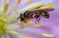 Insekt auf purpurroter Blume Stockbild