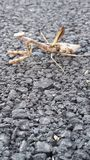 Insekt betender Mantis Stockfotos
