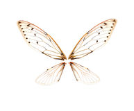Insekt cykada odizolowywająca na białym tle Zdjęcie Stock