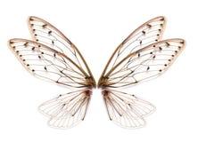 Insekt cykady skrzydło odizolowywający na białym tle obrazy royalty free