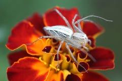 Insekt, das auf einem Blumenmakro sitzt stockbilder