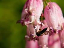 Insekt, das auf einer Blume sitzt Stockfotos