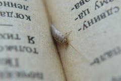 Insekt, das auf Papier - Silberfischchen einzieht Stockbild