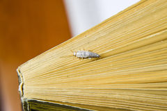 Insekt, das auf Papier - Silberfischchen einzieht Silberfischchen am Ende des Buches Lizenzfreie Stockbilder