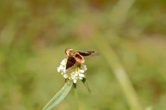 Insekt, das it'slunch sammelt Stockfotos