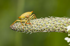 Insekt in der Anlage Lizenzfreie Stockbilder
