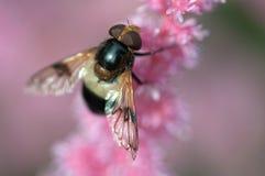 Insekt in der Blume Stockbild