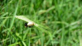 Insekt i ślimaczek próbujemy zostawać na liściu zbiory