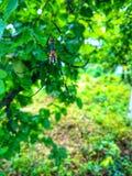 Insekt i sieć obrazy royalty free