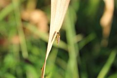 Insekt i trawa w collo zdjęcie royalty free