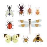 Insekt ikony mieszkanie odizolowywał natury ścigi latającej motyliej mrówki, przyroda pająka pasikonika i komara karakanu ilustracji