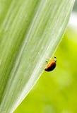 Insekt im grünen Blatt Stockfoto