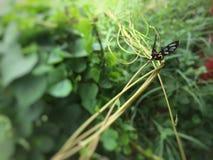 Insekt jest na roślinie obraz stock