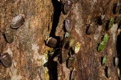 Insekt kolonia Obraz Royalty Free