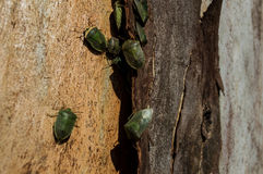 Insekt kolonia Obrazy Stock