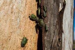 Insekt kolonia Zdjęcie Royalty Free
