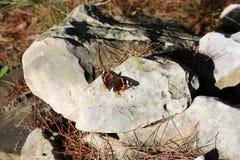 Insekt - mały bezkręgowy członkonóg zdjęcia royalty free