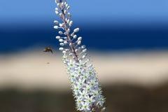 Insekt - mały bezkręgowy członkonóg obrazy royalty free