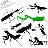 Insekt-Mantis-Schattenbild Stockfoto