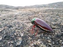 insekt zdjęcia stock