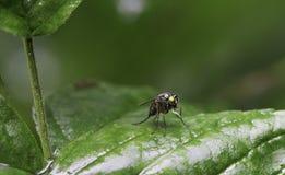 Insekt mit Stamm Stockfoto