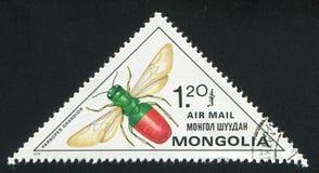 insekt zdjęcie royalty free
