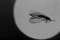 Insekt na brudnym nadokiennym szkle Fotografia Stock