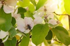 Insekt na drzewie Fotografia Stock