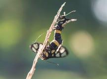 Insekt na gałąź obraz royalty free