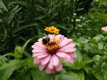 Insekt na kwiacie zdjęcia stock