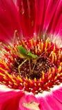 Insekt na kwiacie obrazy stock