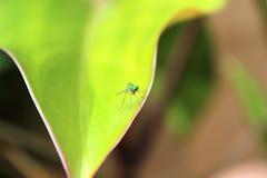 Insekt na liściu obrazy royalty free