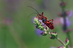 Insekt na roślinie obraz stock