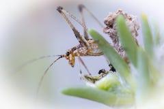Insekt na roślinie zdjęcie royalty free