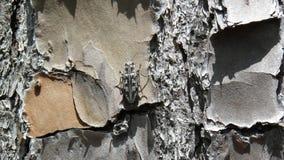 Insekt na sośnie podczas midday fotografia royalty free