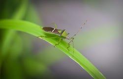 Insekt Na trawa liściu zdjęcie royalty free