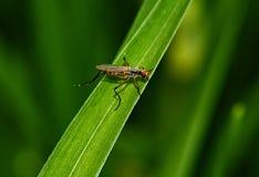 Insekt na trawy zakończeniu up obrazy stock