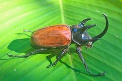 Insekt od Tajlandia fotografia royalty free
