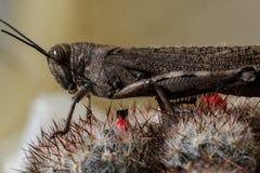 Insekt - pasikonik zdjęcie royalty free