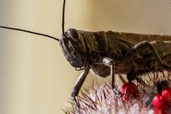 Insekt - pasikonik fotografia stock